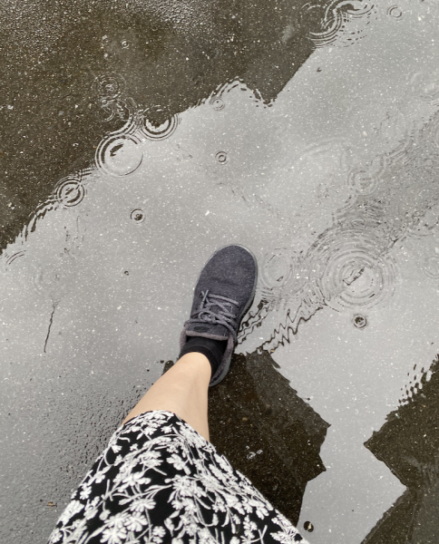 雨の日にallbirdsを履いてみた