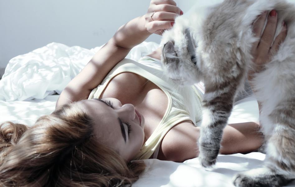 【猫 コロコロ 3選】ベッド、布団用