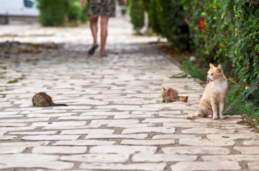 猫を飼うに当たっての責任は考えていますか?